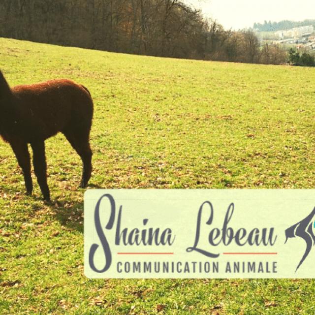 Shaina Lebeau : newsletter mai 2019